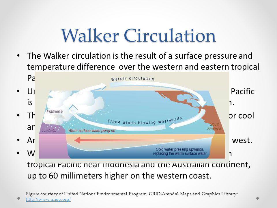 Walker Circulation
