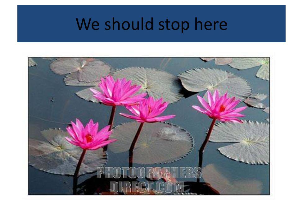 We should stop here