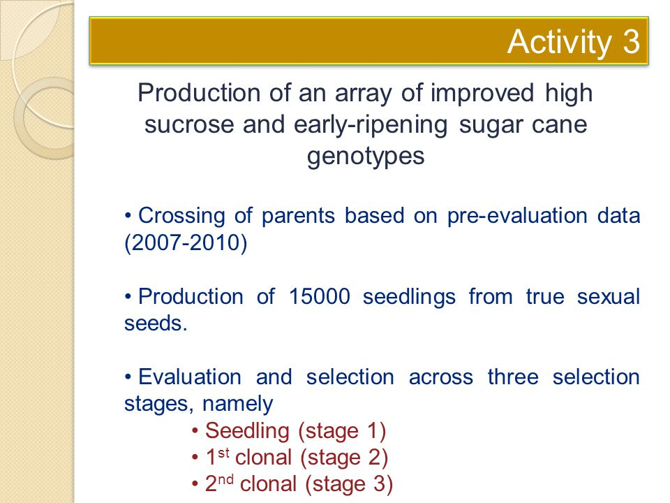 Activity 3 Production of an array of improved high sucrose and early-ripening sugar cane genotypes.