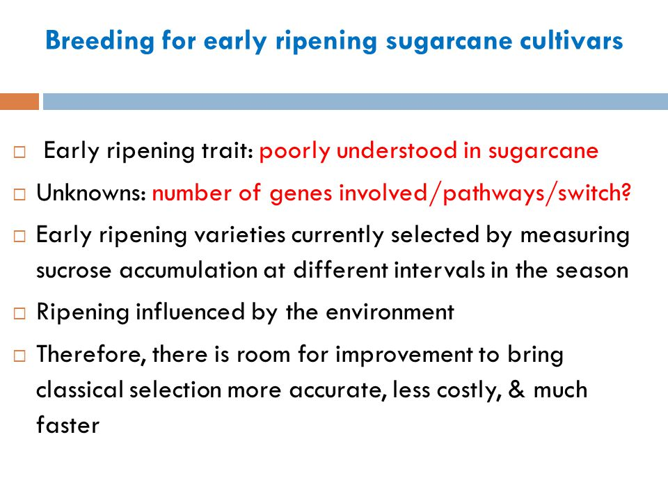 Breeding for early ripening sugarcane cultivars