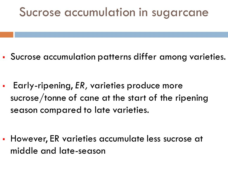 Sucrose accumulation in sugarcane