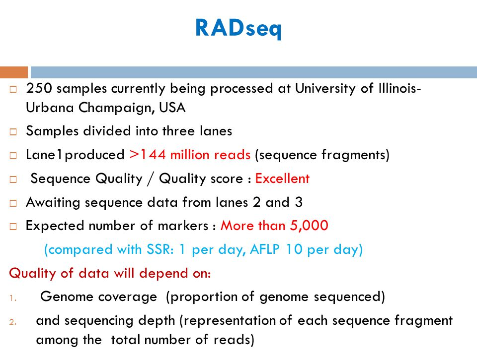 RADseq 250 samples currently being processed at University of Illinois- Urbana Champaign, USA. Samples divided into three lanes