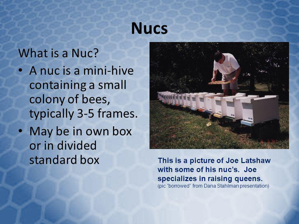 Nucs What is a Nuc A nuc is a mini-hive containing a small colony of bees, typically 3-5 frames. May be in own box or in divided standard box.