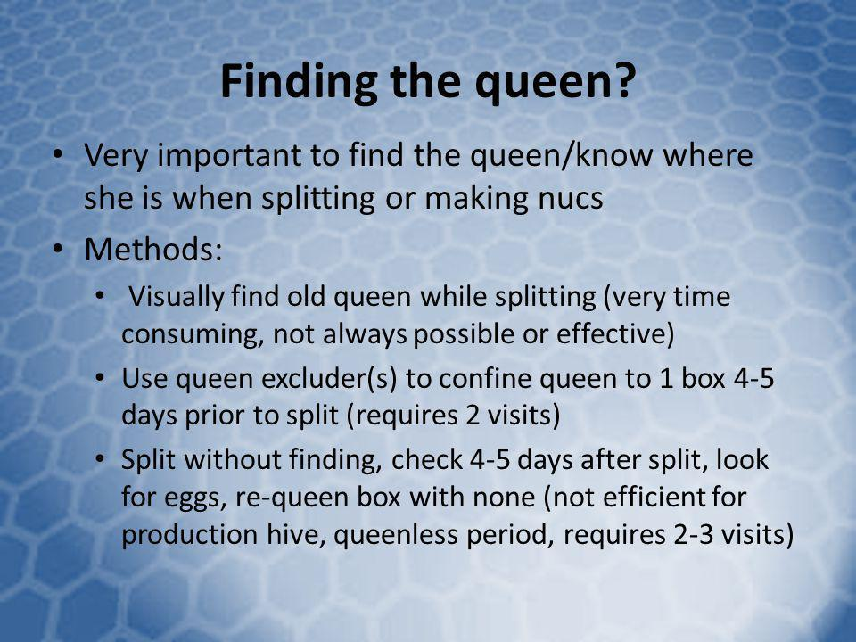 Finding the queen Very important to find the queen/know where she is when splitting or making nucs.