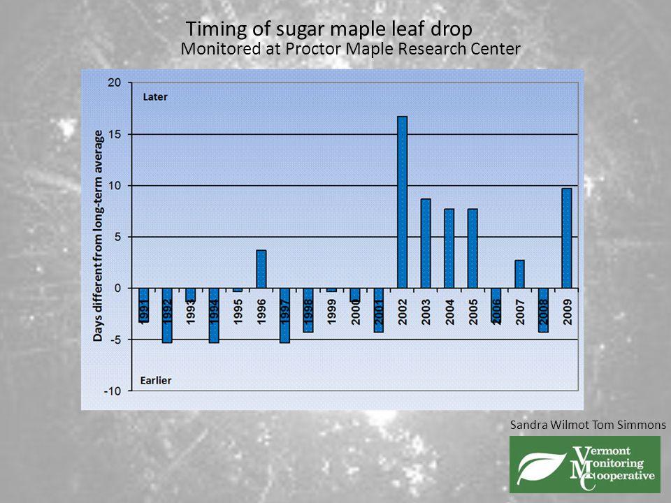 Timing of sugar maple leaf drop
