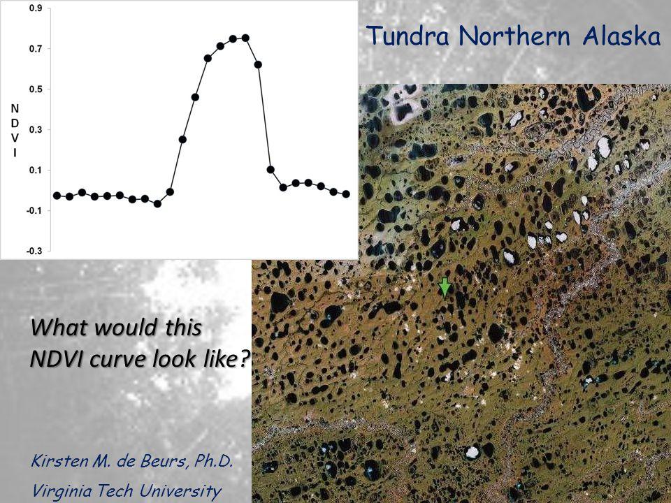 Tundra Northern Alaska