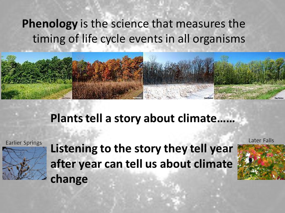 Plants tell a story about climate……