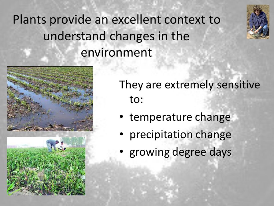 Plants provide an excellent context to understand changes in the environment