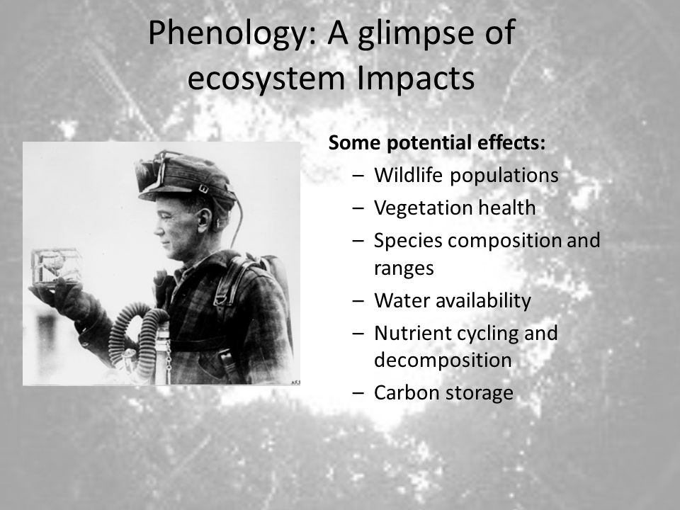 Phenology: A glimpse of ecosystem Impacts