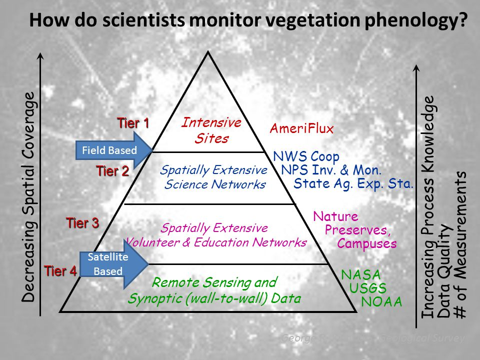 How do scientists monitor vegetation phenology