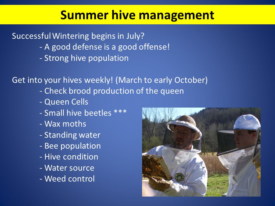 Summer hive management