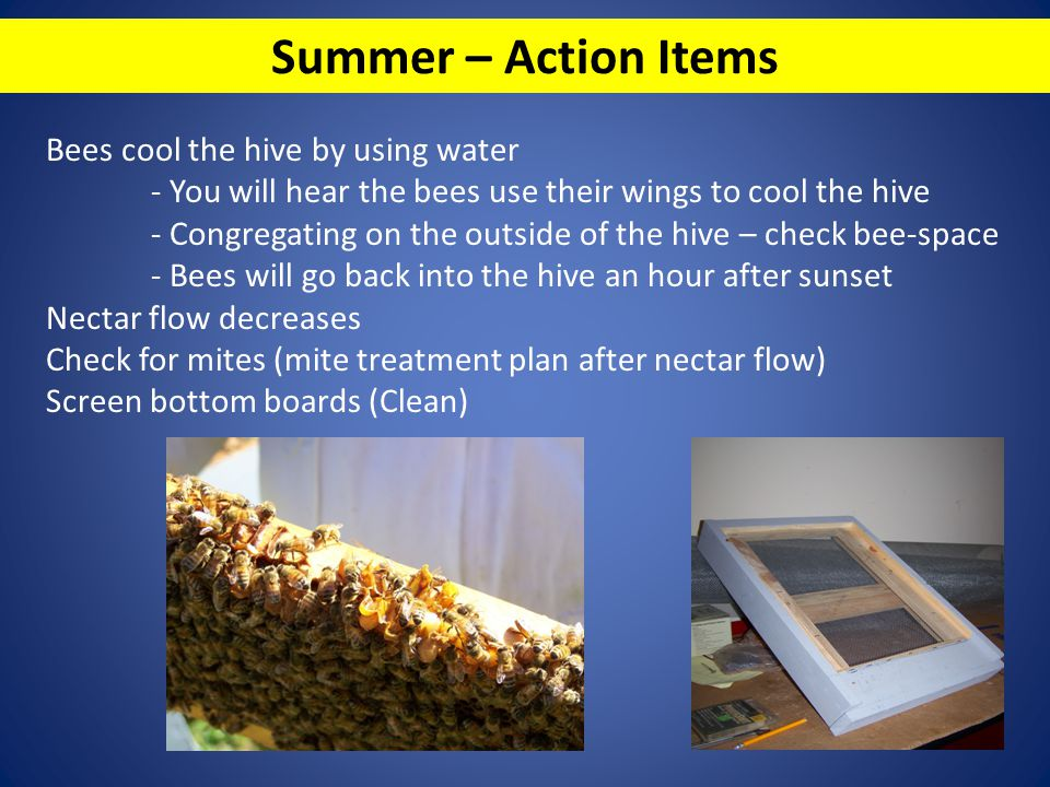 Summer – Action Items Bees cool the hive by using water