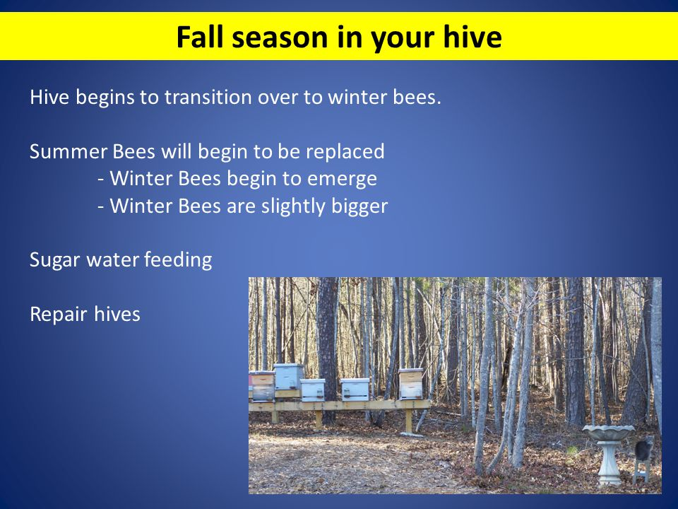 Fall season in your hive