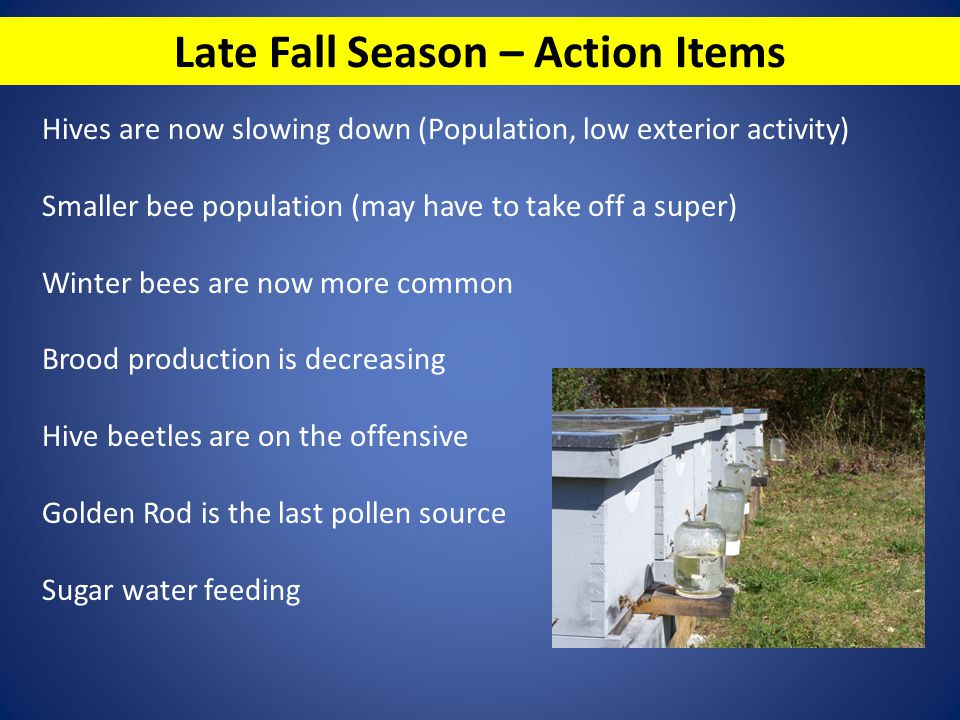 Late Fall Season – Action Items