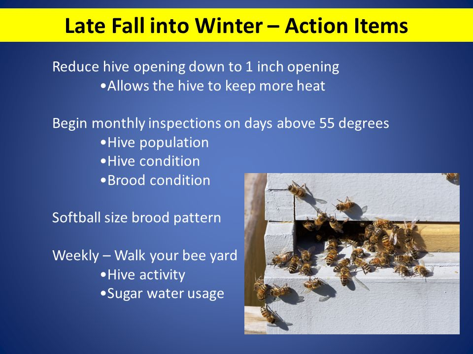 Late Fall into Winter – Action Items
