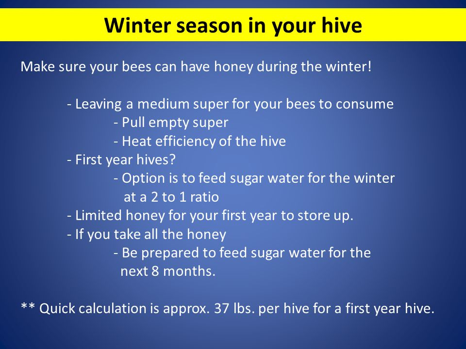 Winter season in your hive