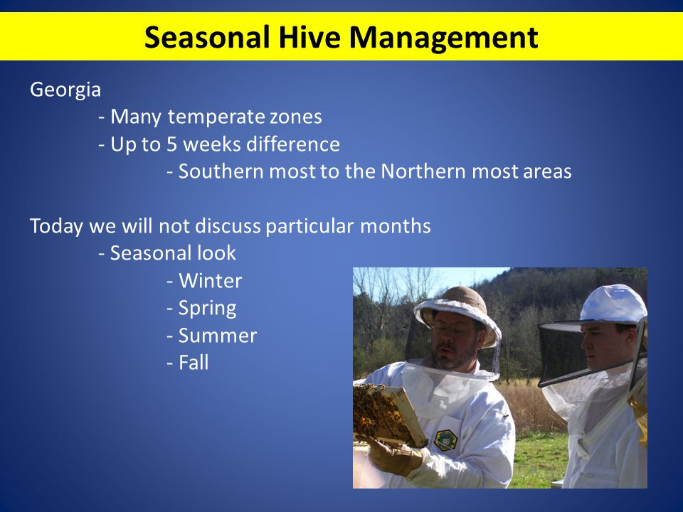 Seasonal Hive Management