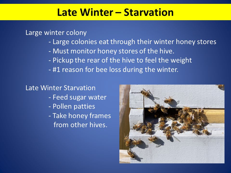 Late Winter – Starvation