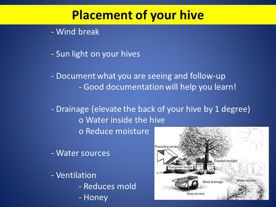 Placement of your hive - Wind break - Sun light on your hives