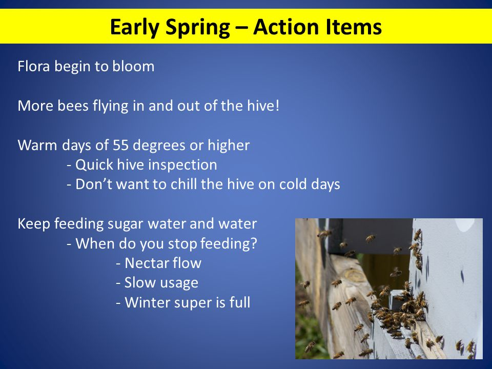 Early Spring – Action Items