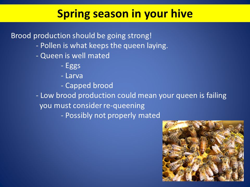 Spring season in your hive