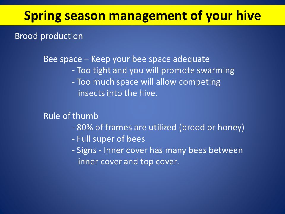 Spring season management of your hive