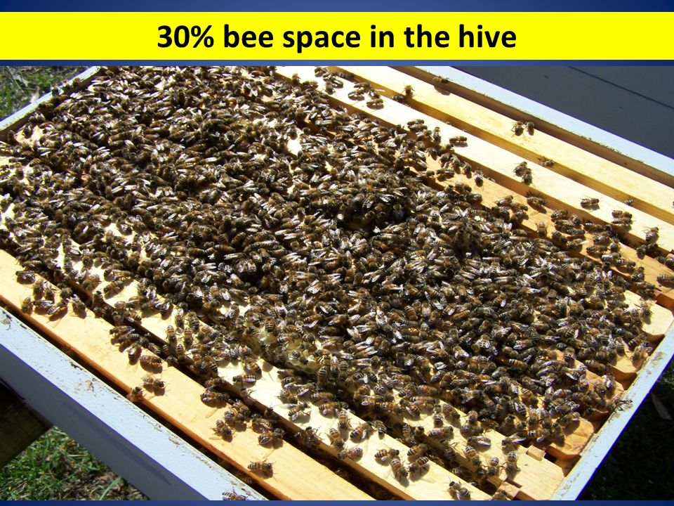 30% bee space in the hive