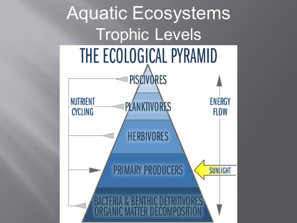 Aquatic Ecosystems Trophic Levels