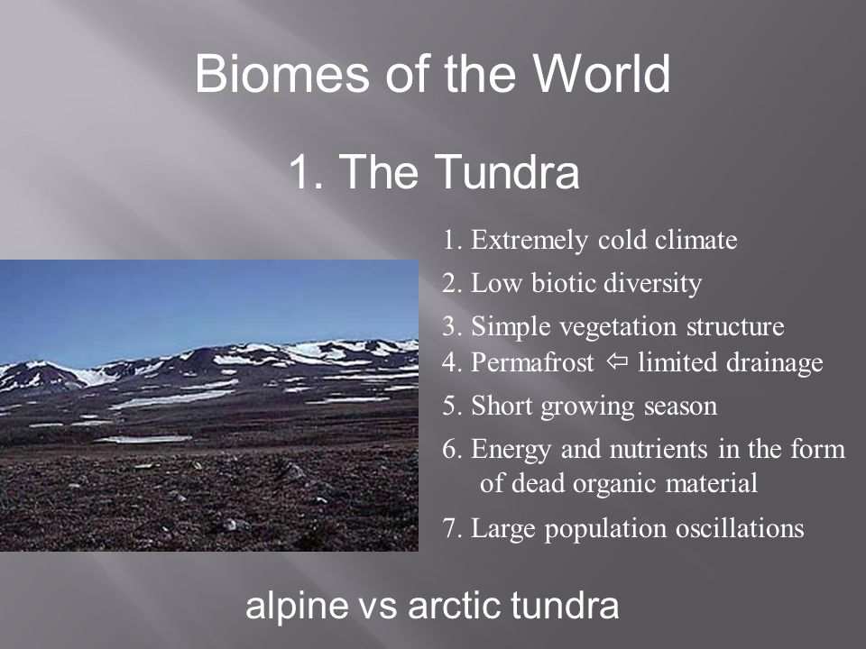 alpine vs arctic tundra