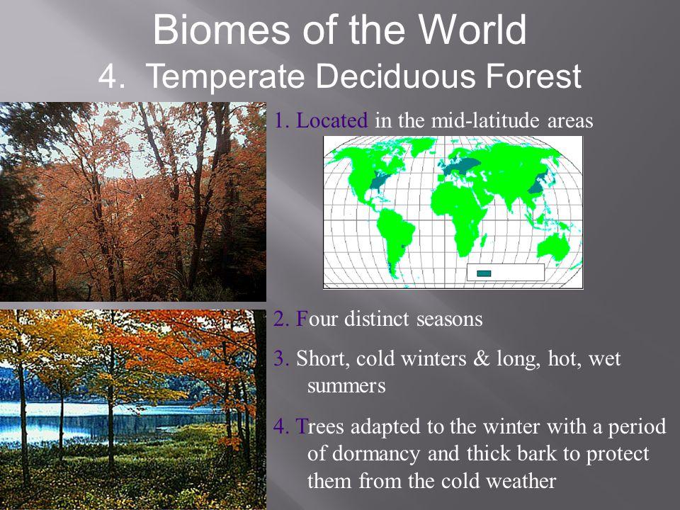 4. Temperate Deciduous Forest