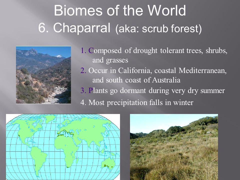 6. Chaparral (aka: scrub forest)