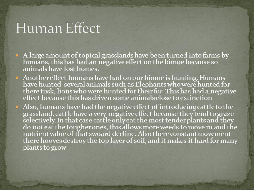 Human Effect