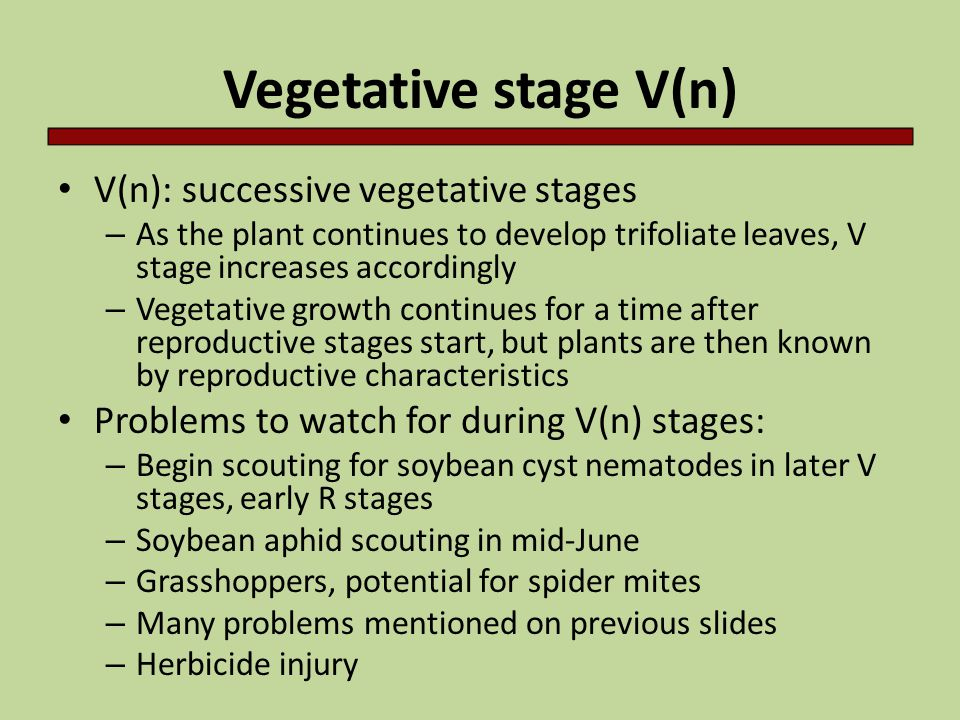 Vegetative stage V(n) V(n): successive vegetative stages