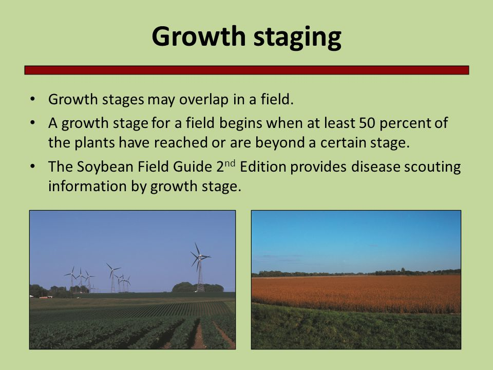 Growth staging Growth stages may overlap in a field.