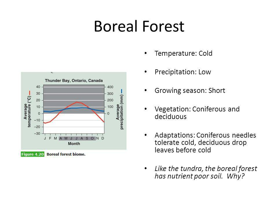 Boreal Forest Temperature: Cold Precipitation: Low