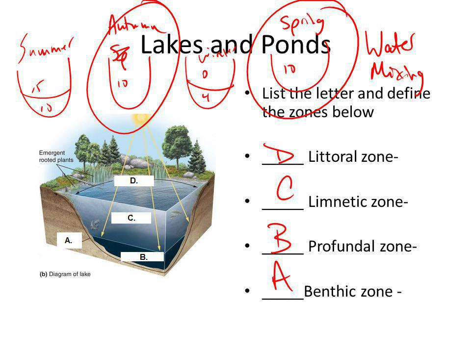 Lakes and Ponds List the letter and define the zones below