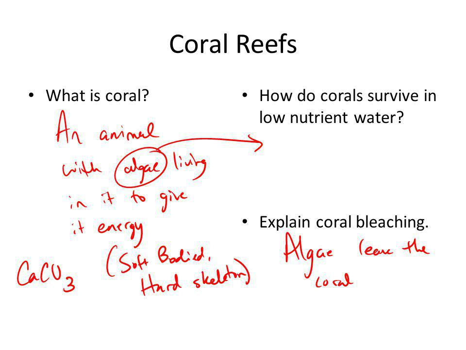 Coral Reefs What is coral