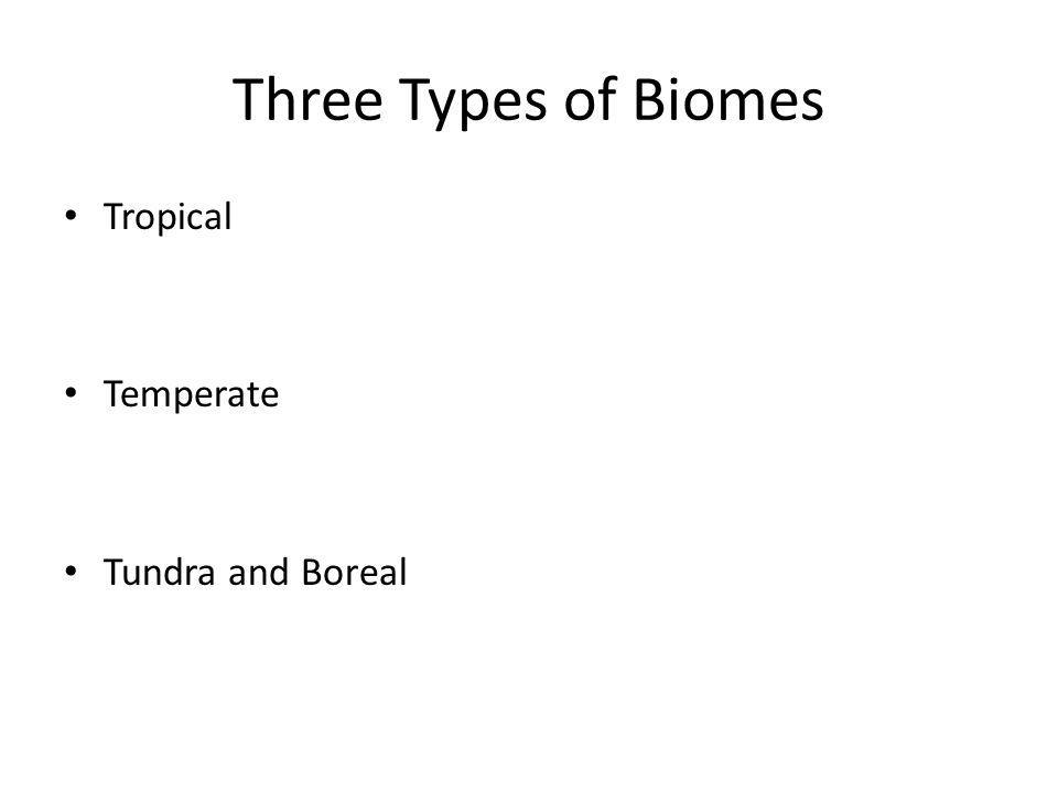 Three Types of Biomes Tropical Temperate Tundra and Boreal
