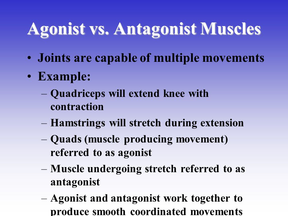 Agonist vs. Antagonist Muscles