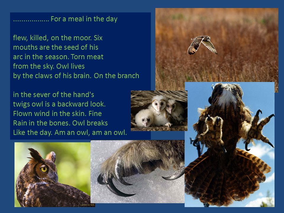 For a meal in the day flew, killed, on the moor