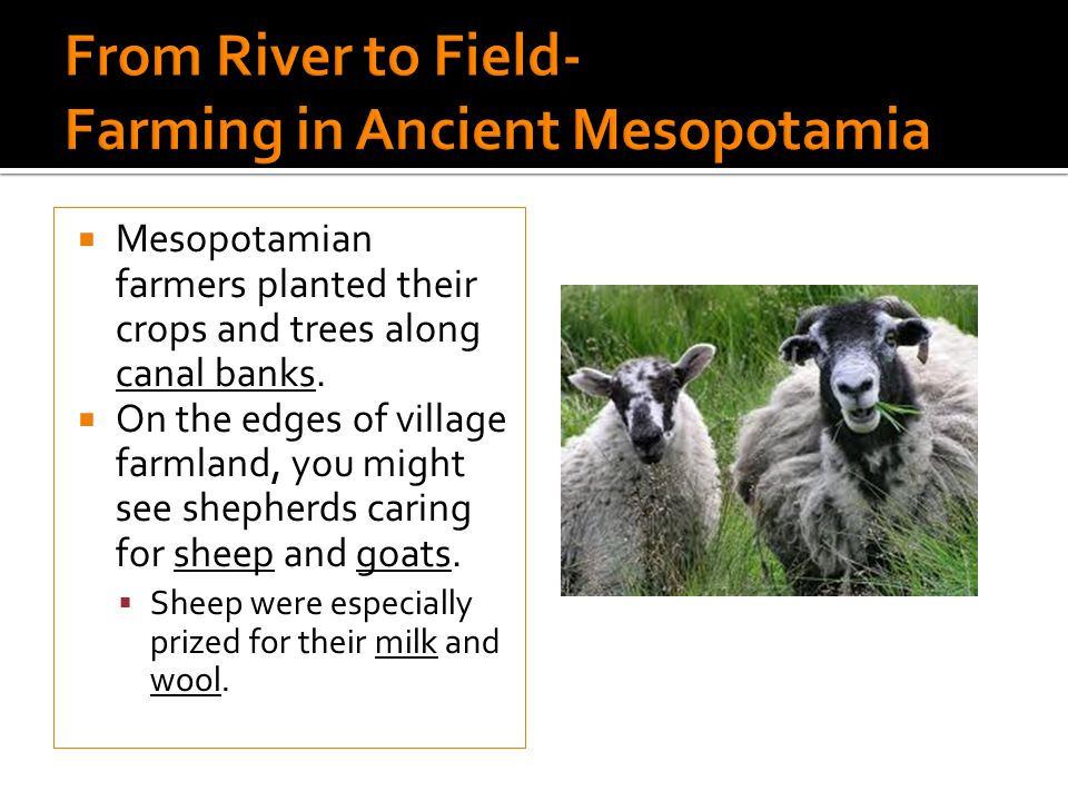 From River to Field- Farming in Ancient Mesopotamia