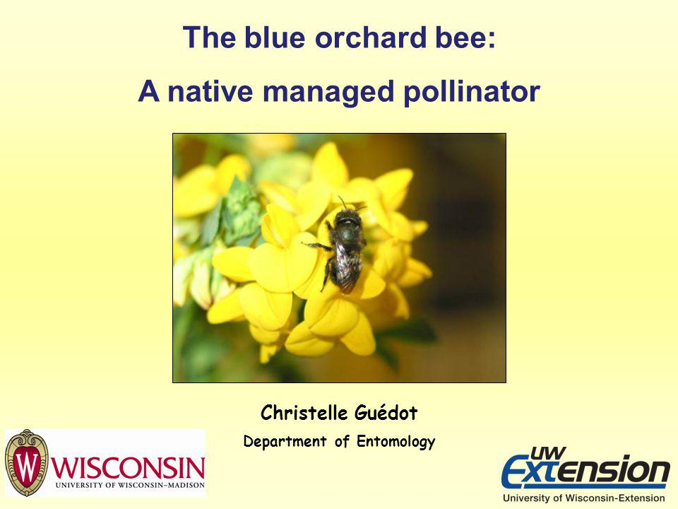 A native managed pollinator Department of Entomology
