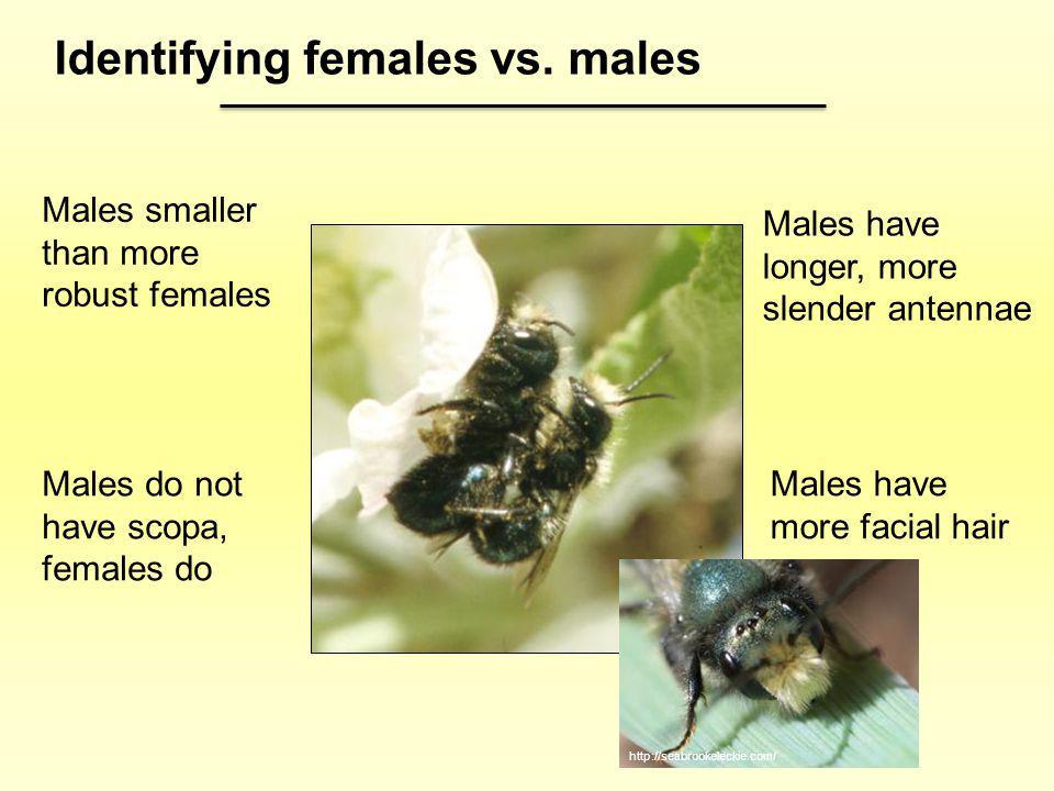 Identifying females vs. males