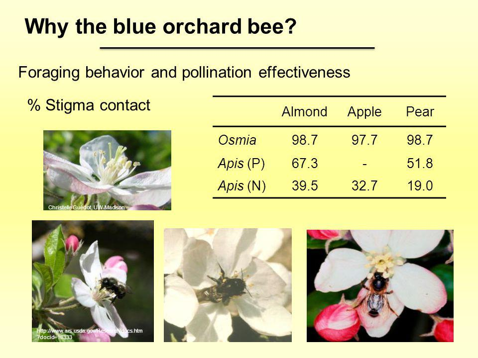 Foraging behavior and pollination effectiveness