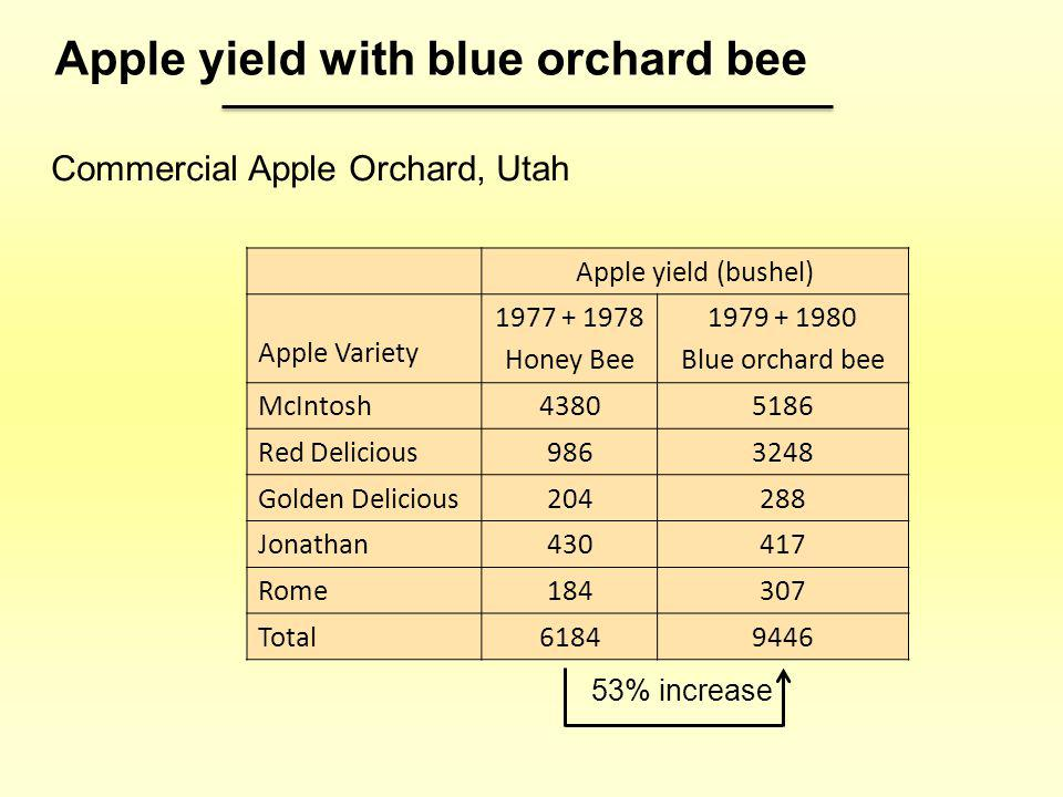 Apple yield with blue orchard bee