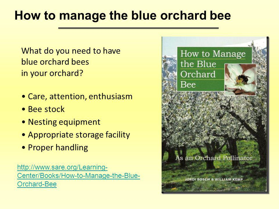 How to manage the blue orchard bee