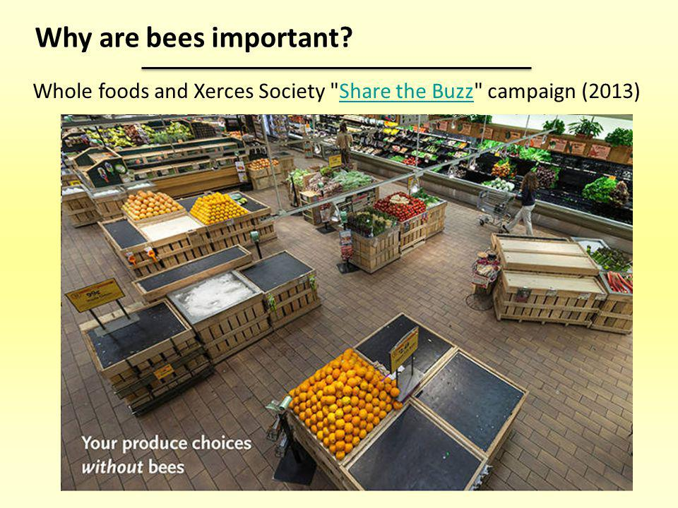 Why are bees important Whole foods and Xerces Society Share the Buzz campaign (2013)