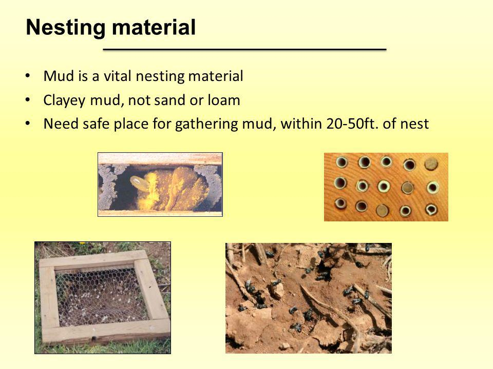 Nesting material Mud is a vital nesting material