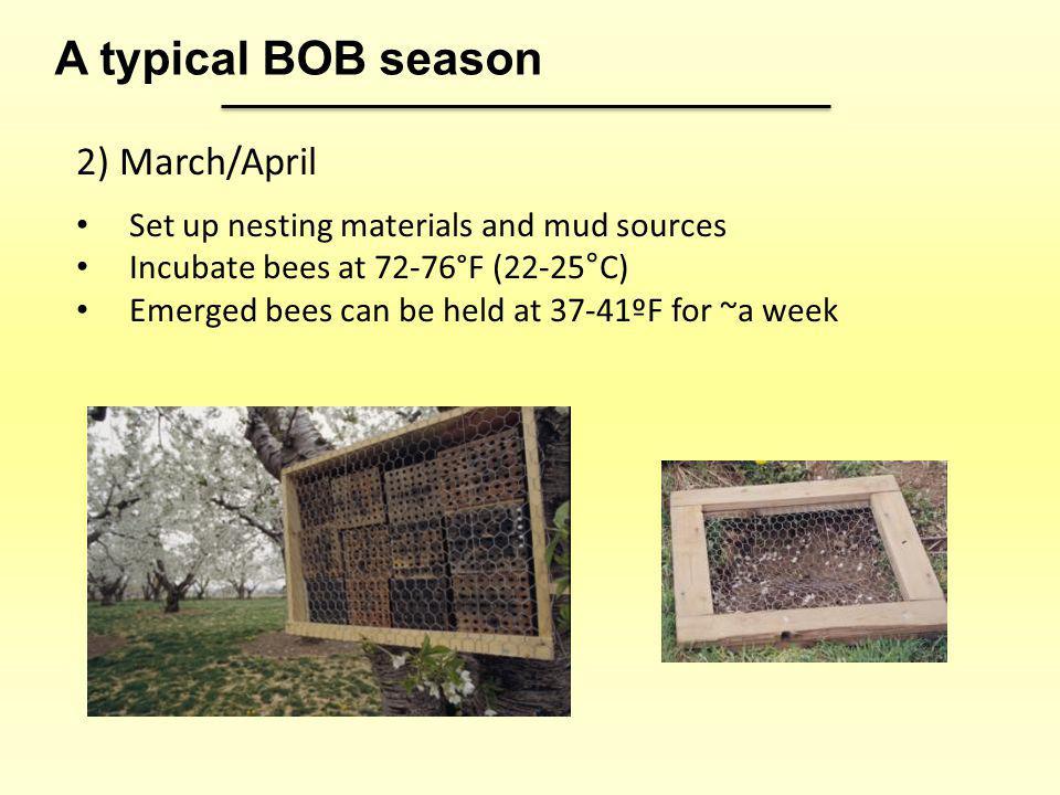 A typical BOB season 2) March/April