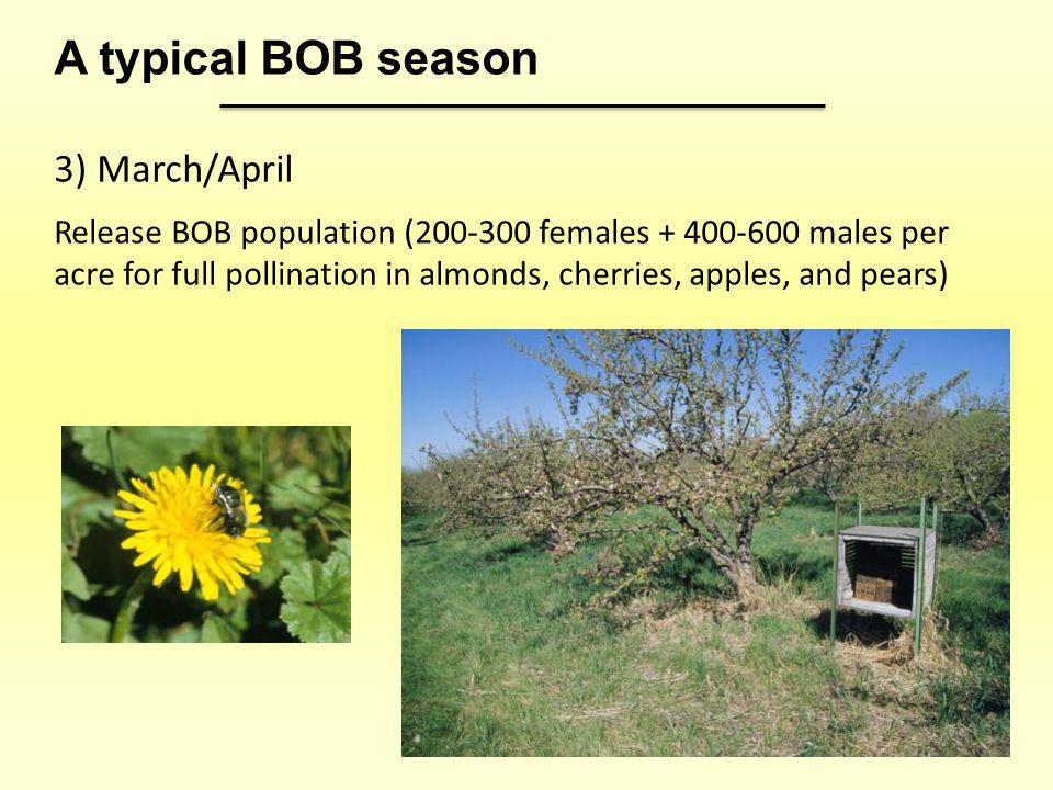 A typical BOB season 3) March/April
